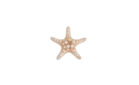 Beach Wedding Natural Starfish Sea Star Hair Clip Hair Accessories