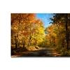 Lois Bryan Fall Walkway Canvas Print