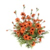 Admired by Nature GPB4403-ORANGE Artificial Full Blooming Daisy Flower