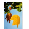 Philippe Sainte-Laudy 'Couples Fall' Canvas Art