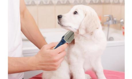 Pet Lush Coat Ionizing Pet Brush For Dogs 2b4adf11-127e-4657-9a97-7e924a190478