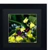 Kurt Shaffer 'Doris Longwing Butterfly on Orchid' Matted Black Framed Art