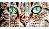 Groupon Goods: Windows to the Soul - Cat Eyes Metal Wall Art