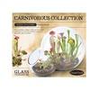 Double Bubble Glass Terrarium - Carnivorous Collection