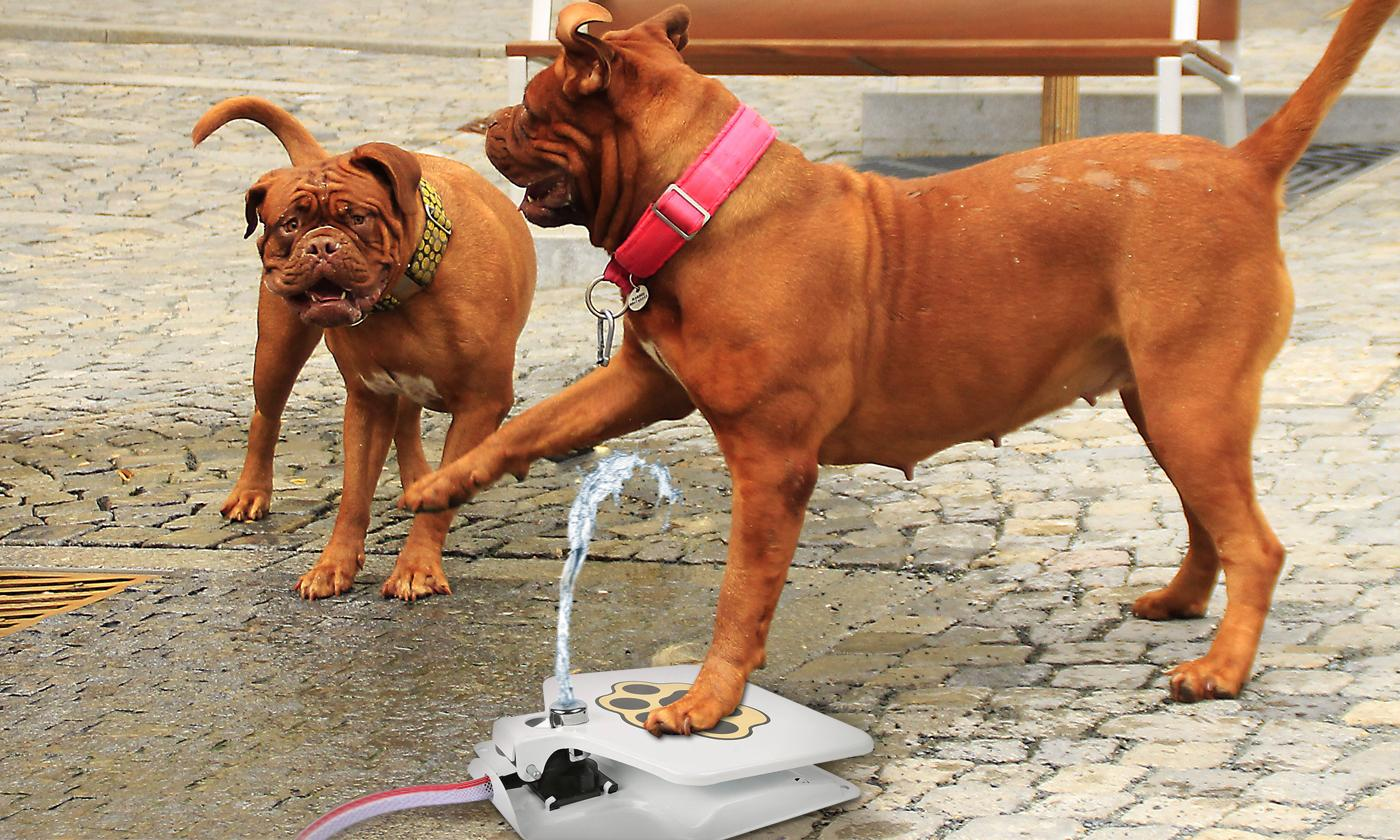 Outdoor Dog Water Fountain with Adjustable Pressure
