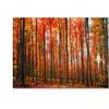 Philippe Sainte-Laudy Dominated Canvas Print