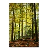 Philippe Sainte-Laudy 'Pause' Canvas Art