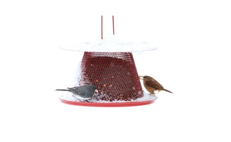 Sweet Corn Products Llc - No-no Cardinal Feeder- Red - C00322 (Goods For The Home Patio & Garden Bird Feeders & Food) photo