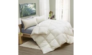 PlumaDown All-Season Organic Cotton Comforter