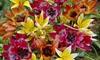 Pre-Order: Perennial Mixture Tulip Bulbs (100-Pack)