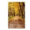 Kurt Shaffer 'Golden Autumn Walk' Canvas Art