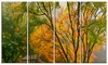 Canopy of Maple Trees in Fall - Floral Photo Metal Wall Art
