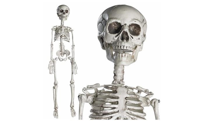 "30"" Halloween Skeleton- Full Body Halloween Skeleton w/ Movable Joints"