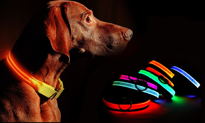 Deformācija Āzijas kopā led dog collar - ipoor.org