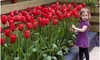 Sky High Scarlet Tulip Flower Bulbs (10-, 20-, or 50-Pk.)