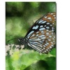 Lois Bryan Butterfly in Blue Canvas Print