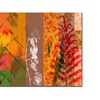 Miguel Paredes 'Panels II' Canvas Art