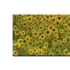 Kurt Shaffer 'A Sunflower Day' Canvas Art