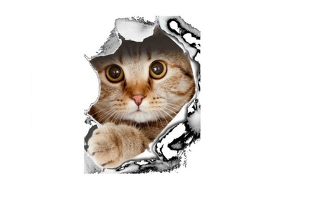 3D Cats Art Vinyl Wall Sticker 705fff46-1edc-47dd-bdf4-626c15a56f29