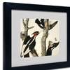John James Audubon 'Ivory-Billed Woodpecker' Matted Black Framed Art
