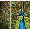 Grand Peacock - Animal Photography Metal Wall Art