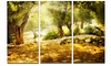 Olive Trees - Photography Glossy Metal Wall Art