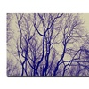 Ariane Moshayedi 'Branches' Canvas Art