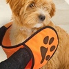 Absorbent Small Pet Towel With Paw Print Hand Pockets