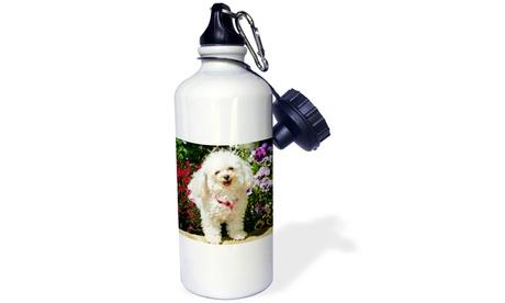 Water Bottle Colorado, Summit County, Teacup poodle dog US06 BJA0070 Jaynes Gal photo