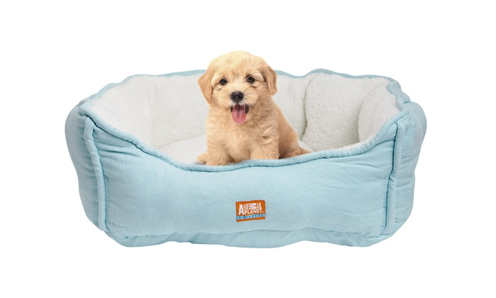 Animal Planet Dog Bed Groupon