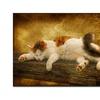 Lois Bryan 'Sleeping Kitty' Canvas Art