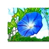 Kathie McCurdy Heavenly Blue Morning Glory Canvas Print