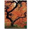 David Farley Japanese Tree I Canvas Print