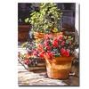 David Lloyd Glover Blossom Niche Canvas Print