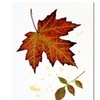 Red Maple by Kathie McCurdy -18x24  Canvas Print 18 x 24