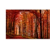 Philippe Sainte-Laudy The Red Way Canvas Print