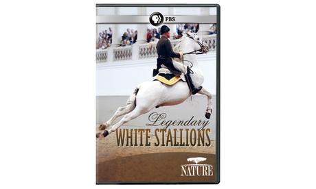 NATURE: Legendary White Stallions DVD f452c30f-ca5b-411b-a9f0-3ae839a421ce