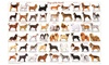 Groupon Goods: Dogs of the World Educational Science Chart Poster