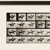 Jockey on a Galloping Horse by Eadweard Muybridge