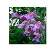 Kurt Shaffer Postman Butterfly on Orchid Canvas Print