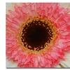 Amy Vangsgard 'Pink and Brown Gerber Center' Canvas Art