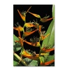 Kathie McCurdy Tropical Paradise Canvas Print