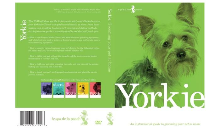 How To Groom Yorkie Dog Grooming Video Groupon