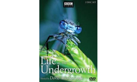 Life in the Undergrowth (Dbl DVD) (WS) 5c274bec-72fd-4231-83b4-2c803af163cd