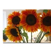 Martha Guerra Sunflowers VIII Canvas Print 16 x 24
