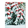 Kurt Shaffer Winter Berries and Pine Canvas Print