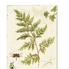 Lisa Audit Ivies and Ferns I Canvas Print