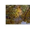 Kurt Shaffer Brilliant Ohio Autumn Canvas Print