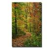 Kurt Shaffer Fall Trail Canvas Print