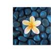 David EVans 'Plumeria & Pebbles 2' Canvas Art